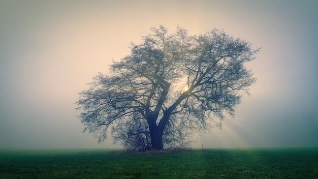 Albero sul campo di erba verde