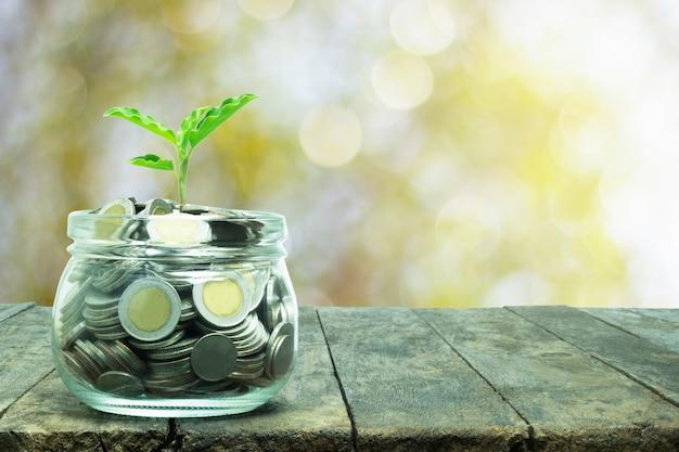 Дерево растет в банке с монетой символ маржинального бизнеса