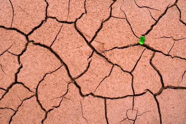 A tree growing on crack dried soil  ground in drought, affected of global warming made climate change. water shortage and drought concept.