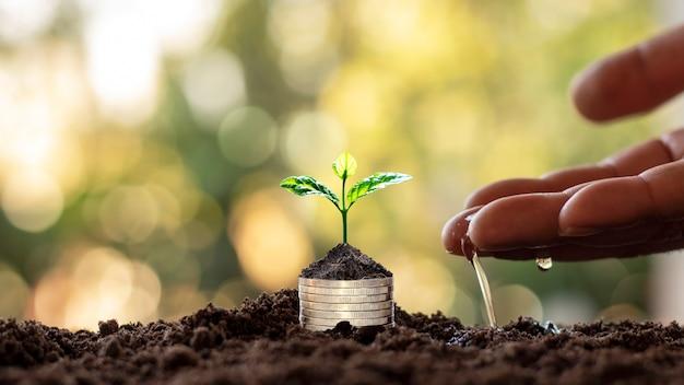 中小企業のためのコインとぼやけた自然の緑、財務およびお金の管理の概念から成長する木