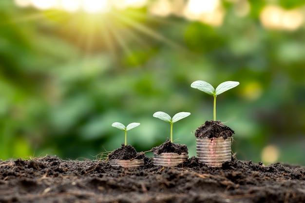 コインとぼやけた自然の緑から成長する木