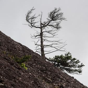 Tree growing on hill, hopewell rocks, bay of fundy, new brunswick, canada
