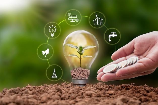 蛍光灯の省エネランプと土壌エネルギーのアイコン、エネルギー、環境の概念で育つ木。