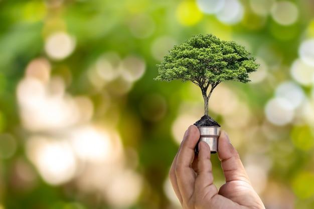 녹색 자연 bokeh 배경, 환경 및 지구 생태 개념의 보존을위한 녹색 에너지 개념에 전구에서 성장하는 나무.