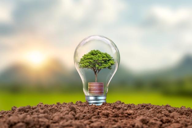 Дерево, растущее на монетах в луковицах, включая концепцию энергосбережения на фоне заката. возобновляемые источники энергии и охрана окружающей среды.