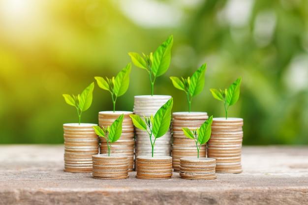 Дерево, растущее на монетах стека с sunray для экономии денег концепции