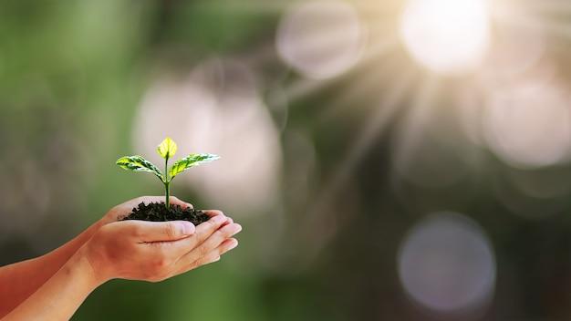 흐린 녹색 자연 배경, 식물 성장 및 환경 보호의 개념으로 인간의 손에 성장하는 나무.