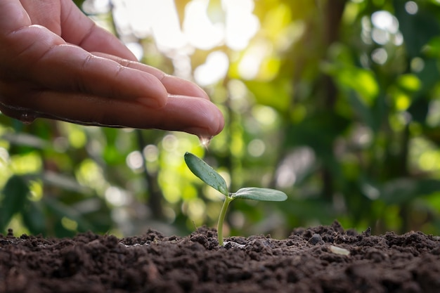 Tree growing on soil and farmers hand caring for trees with watering plants planting ideas