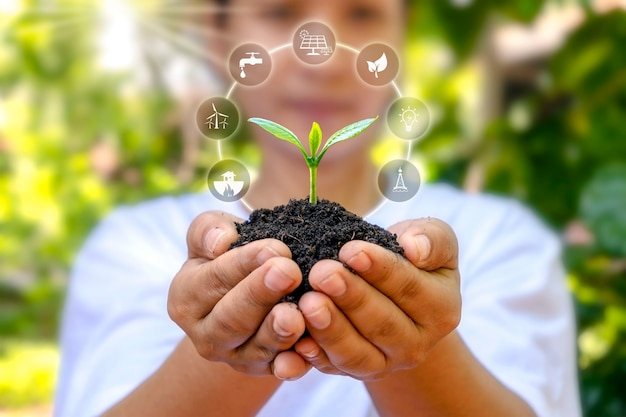 Tree growing on soil in human hands and plant growth factor icon plant growth concept