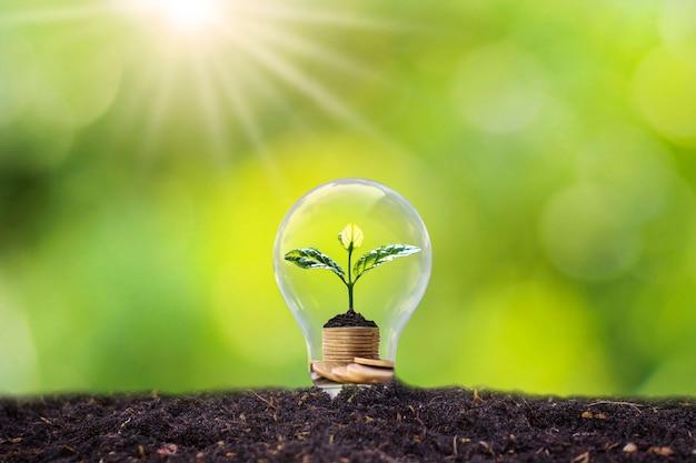 나무는 전구, 에너지 절약 및 환경 개념에서 자랍니다.
