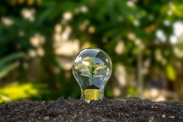 나무는 지구의 날에 전구, 에너지 절약 및 환경 개념에서 자랍니다.