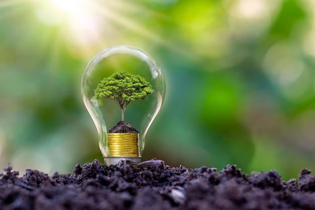 アースデイでは、木は電球、省エネ、環境の概念で育ちます。