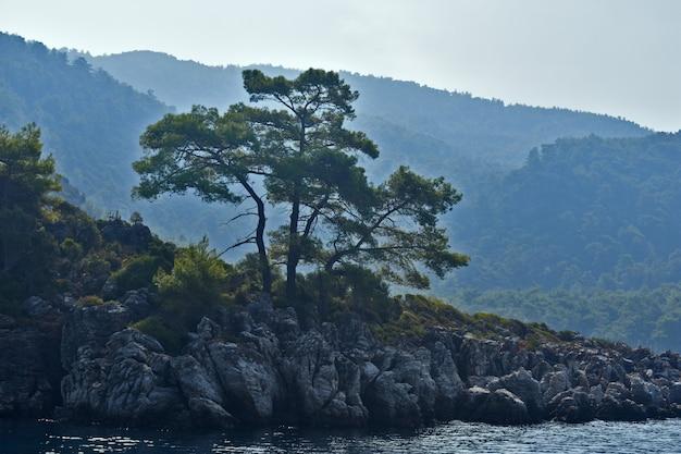 나무는 바다의 바위 위에서 자랍니다.