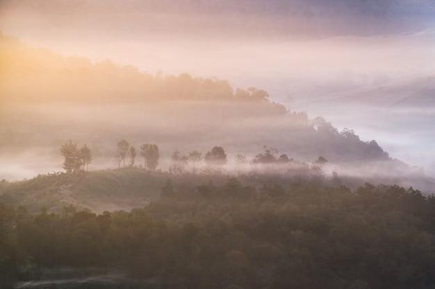 Tree on hill in foggy at dawn,baan jabo,mae hong son,thailand