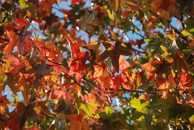 秋の色の木