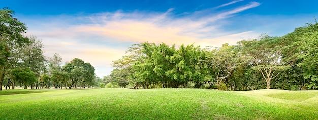 Дерево на поле для гольфа на время заката