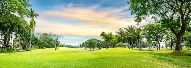 Дерево в поле для гольфа