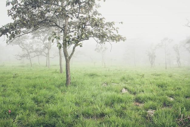 自然の中の木