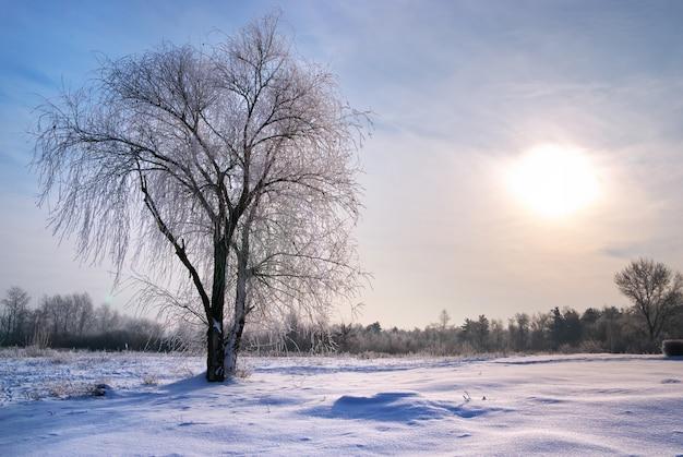 Дерево в иней