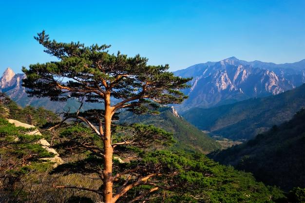 설악산 국립 공원의 나무