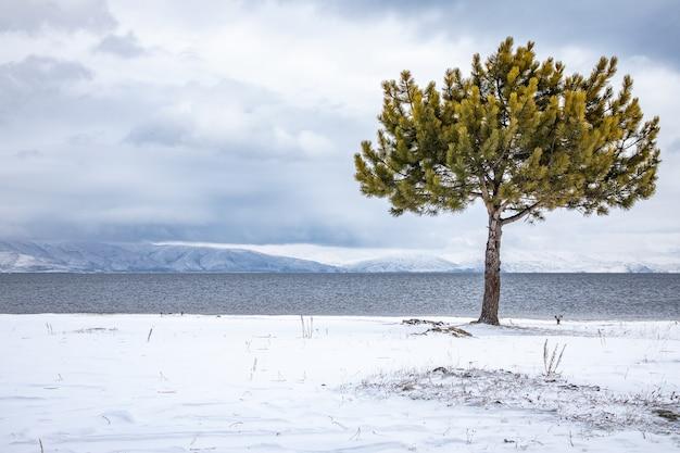 Дерево на заснеженном пляже с озером и горами