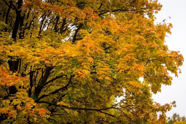 紅葉、秋のシーズンと都市公園の木。
