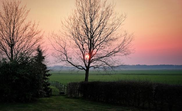 日没オランダオランダ春の田舎の牧草地の木