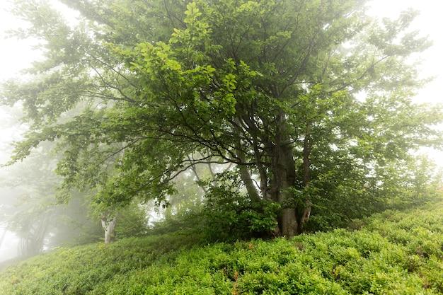 ブルーベリーの茂みに囲まれた朝霧の木