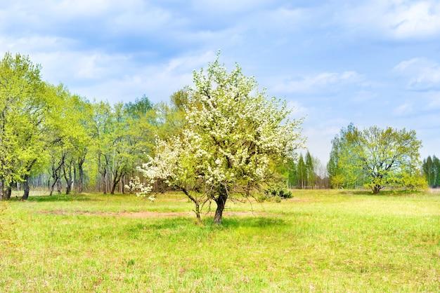 緑の野原に白い花の木