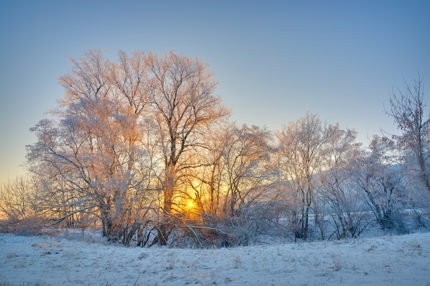 The tree is covered with hoarfrost in the winter. photographed at sunrise on the surface of a cloudless sky.
