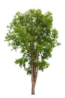白い背景の上の木の分離 Premium写真