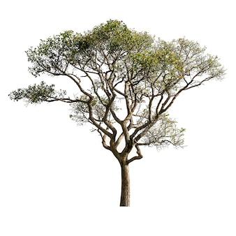 Дерево, изолированные на белом фоне для дизайна материала