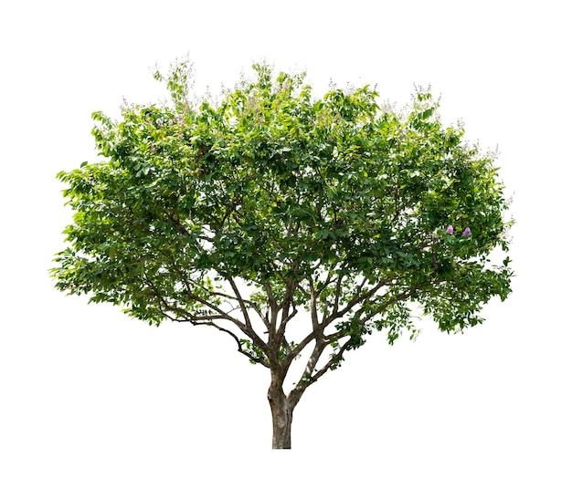 건축 디자인 또는 그 이상에 사용하기 위해 흰색 배경에 고립 된 나무.