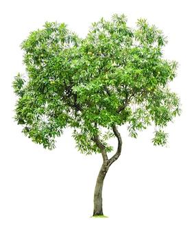 建築設計以上で使用するために白い背景で隔離された木。