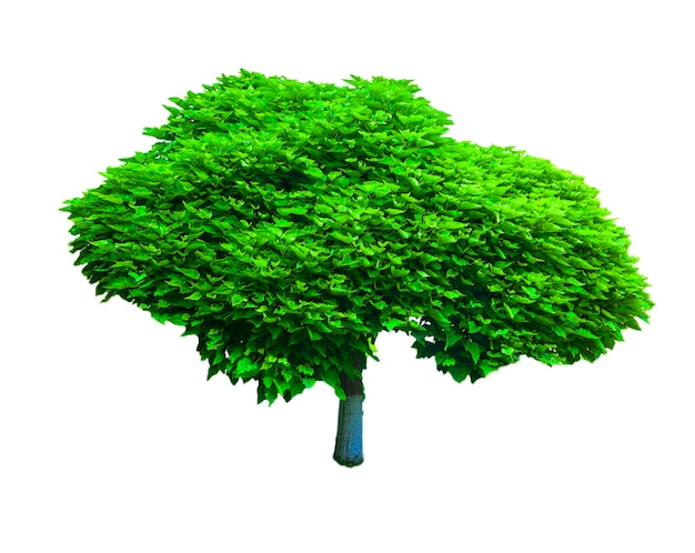 白い背景で隔離の木(パスを含む)