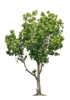白い背景で隔離の木。