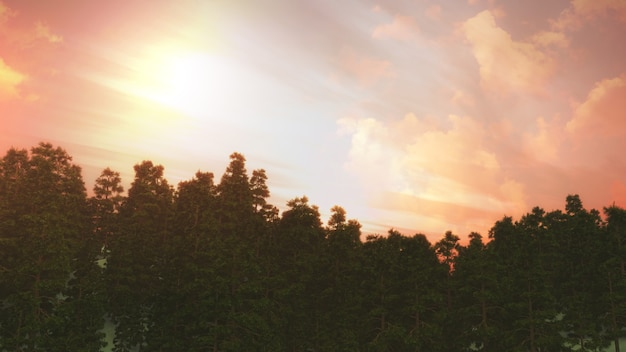 夕焼け空を背景に木の風景