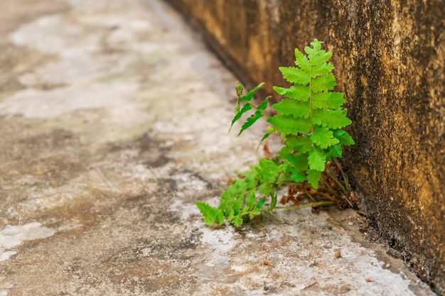 Tree leaf growing on cement crack concrete
