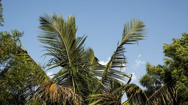 青い空を背景に木の葉