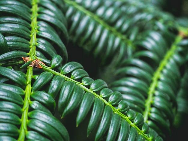 Листья деревьев в естественной среде. богатая зелень. растения в ботаническом саду.