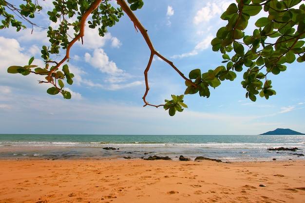 Tree leaves over luxury beach