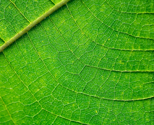 Tree leaves for nature and save green