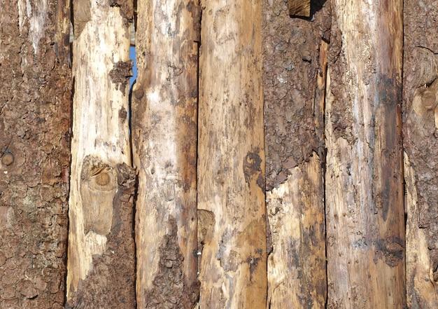 Tree logs texture