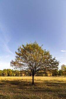 Tree in a meadow under the sunlight
