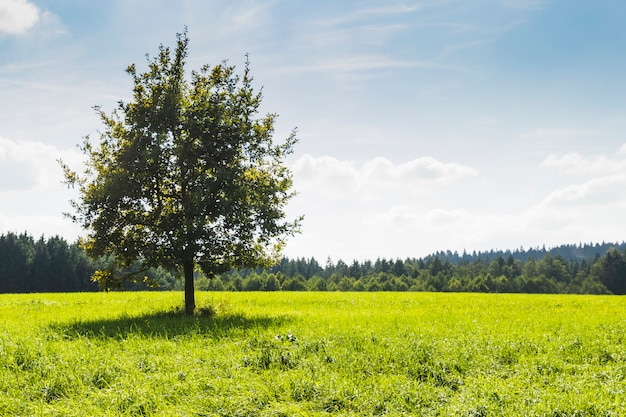 Tree in the middle of green meadow next to a forest