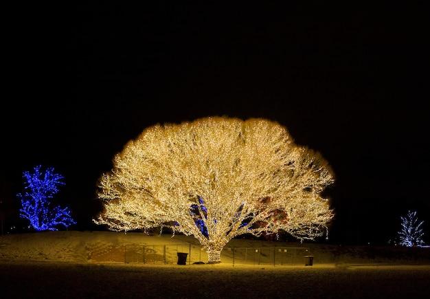 命の木。呉服屋。ユタ州のクリスマスツリー。