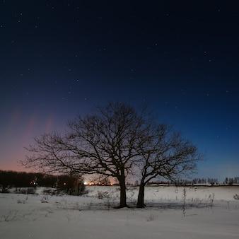 겨울에 별 밤하늘의 배경에 나무.