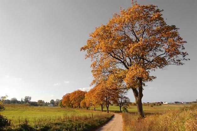 未舗装の道路上のツリー