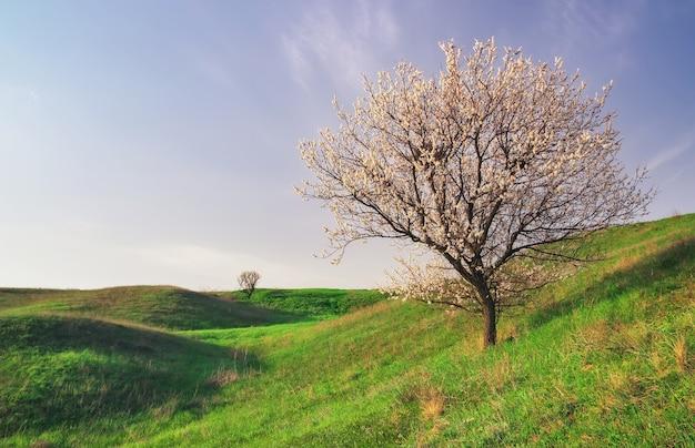 Дерево на поле и голубом небе. красивый весенний пейзаж, композиция природы