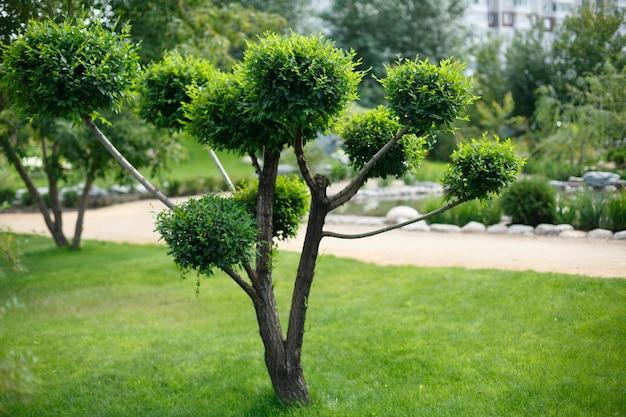 Дерево на зеленой траве в саду в японском стиле